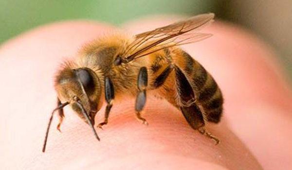 сколько стоит увеличение пениса укусами пчел