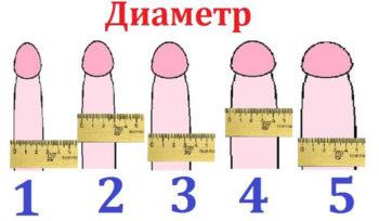 ширина члена