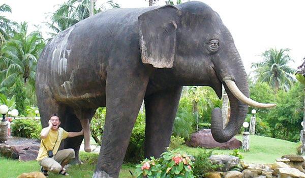 какой размер члена у слона
