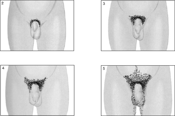 таблица размеров члена по возрасту