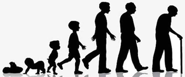 как узнать размер члена по возрасту